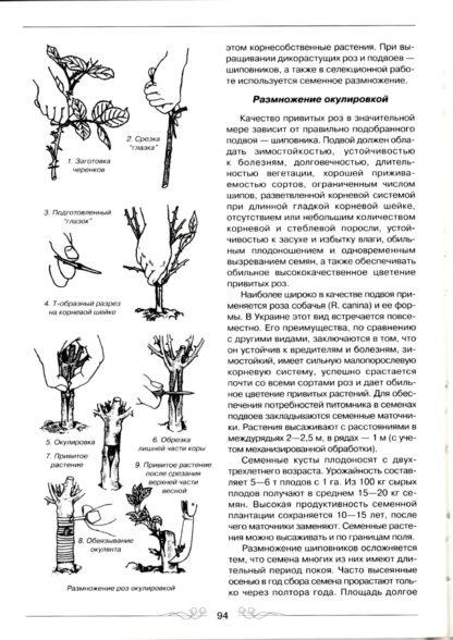 Сад Роз. Олена Рубцова, Валентина Мєшкова-1-фото